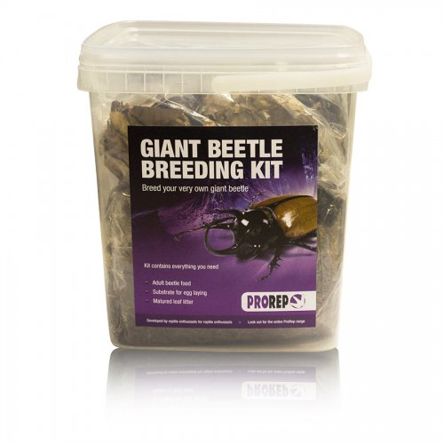 Pro Rep Chafer Beetle Rearing Kit