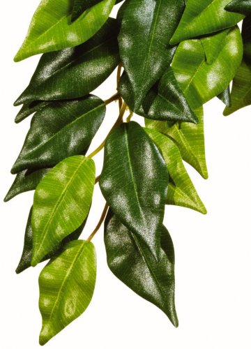 Exo Terra Silk Ficus Plant Medium