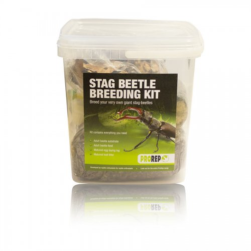 Pro Rep Stag Beetle Rearing Kit