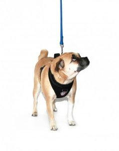 Canada Pooch Everything Harness Black X-Small