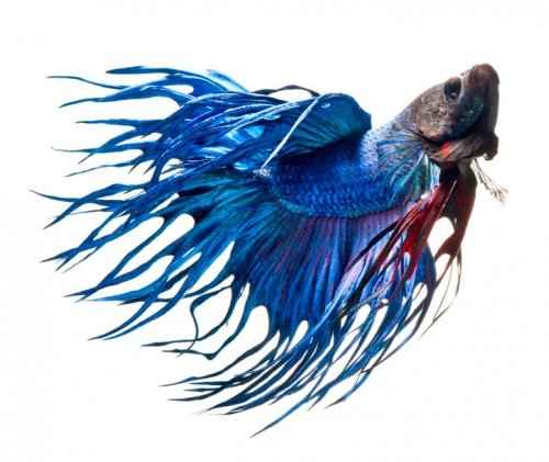 Aquariums & Aquarium Supplies