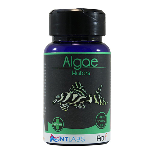 NT Labs Pro-F Algae Wafers 40g